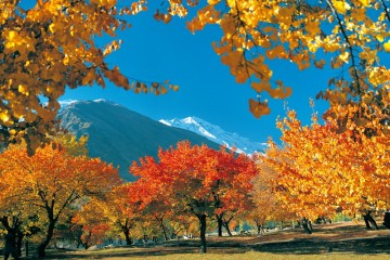 Autumn tour to hunza , skardu , fairy meadows , naltar , khaplu with karakoram adventure holidays. website www.kahtours.com