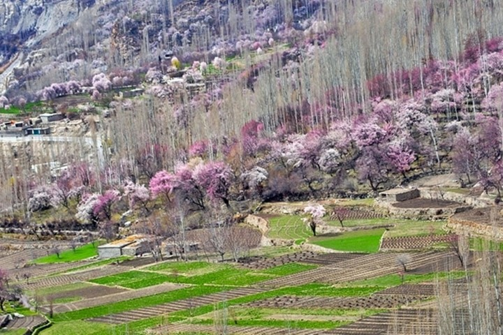 Northern Areas of Pakistan hunza view in spring