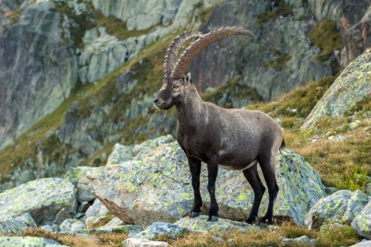 kahtours blue sheep and ibex hunting in shimshal valley hunza gilgit baltistan